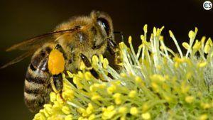 Hemp And Bees