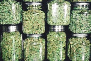 5 Fun Facts About Weed