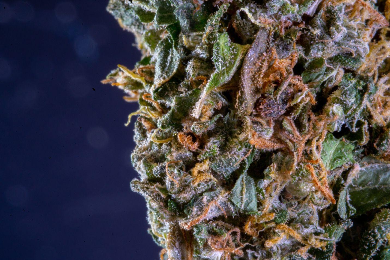 7 Health Benefits of Marijuana You Might Not Know